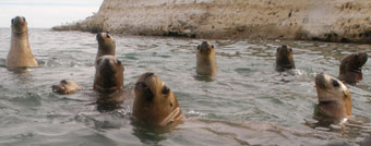 sea lions and elephant seals